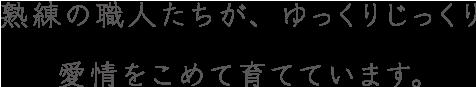 スペシャルギフト胡蝶蘭Mコレクションは熟練の職人たちが、ゆっくりじっくり愛情をこめて育てています。