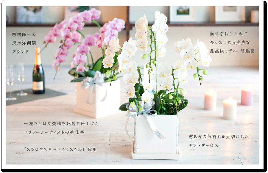 スペシャルギフトMコレクション胡蝶蘭のあるライフスタイル